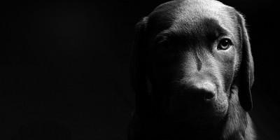 o-BLACK-DOG-SYNDROME-facebook